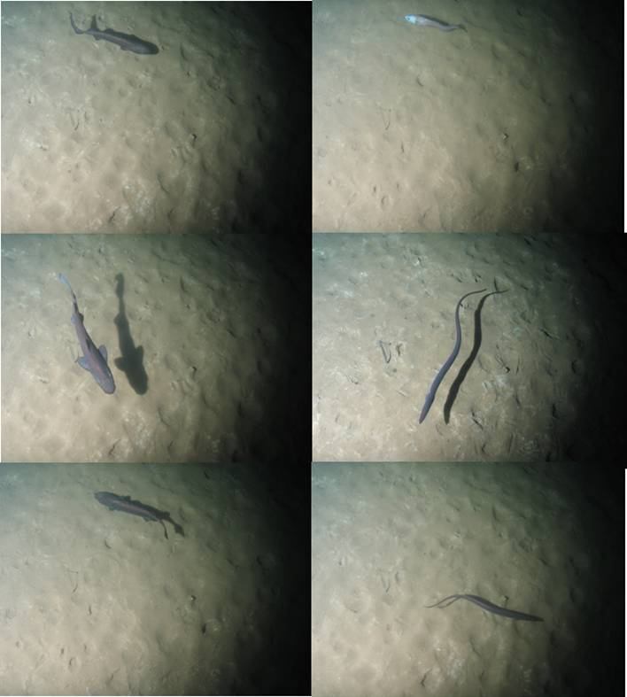 Fish photographed by the near field close view camera